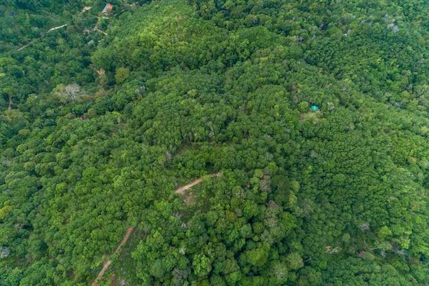 Luchtfoto drone camera bovenaanzicht regenwoud bomen ecologie met gezonde omgeving concept en zomer achtergrond.