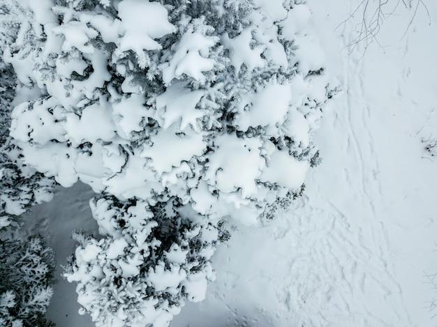Luchtfoto drone uitzicht op dennen- en bladbos bedekt met sneeuw in koele winterdag b