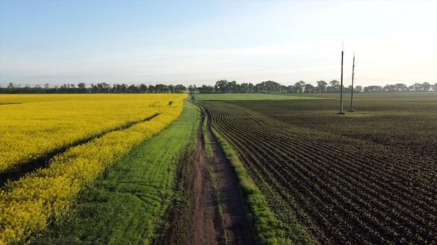 Luchtfoto drone vlucht over de weg tussen een geel bloeiend koolzaadveld