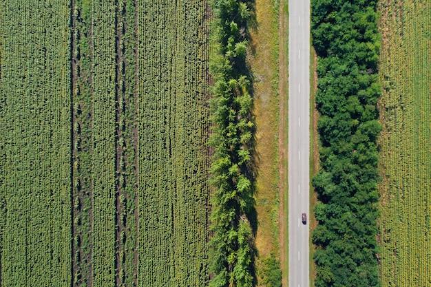 Luchtfoto drone-weergave van gestripte zonnebloemvelden verdeeld met bossen en een snelweg