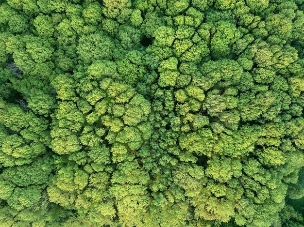 Luchtfoto groen bos, een integrale natuurlijke ecologische omgeving.