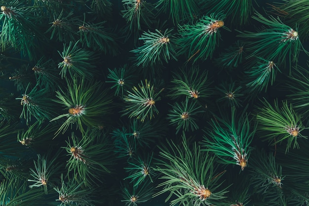 Luchtfoto groenblijvende dennenbos gemaakt van takken. minimaal natuurconcept. plat leggen.