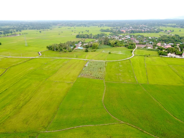 Luchtfoto, groene rijstvelden in landelijke gebieden
