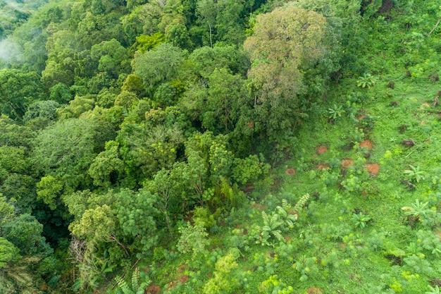 Luchtfoto hoge hoek bekijken top-down regenwoud bomen ecosysteem en gezonde omgeving