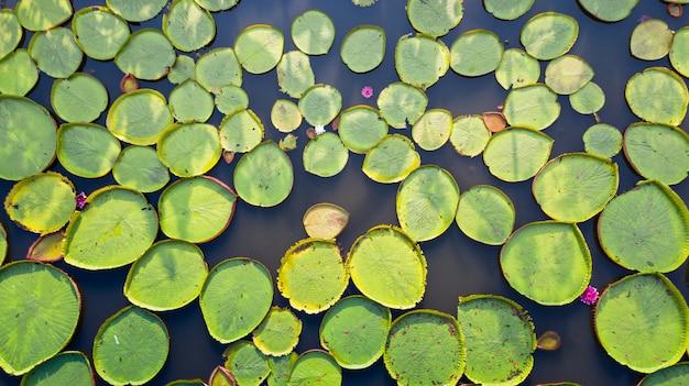 Luchtfoto hoogste mening van victoria-waterlelies