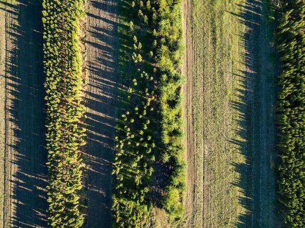 Luchtfoto jonge zaailingen van bomen op het veld in het voorjaar. het concept van het behoud van de ecologie en het planten van de planeet. foto van de drone