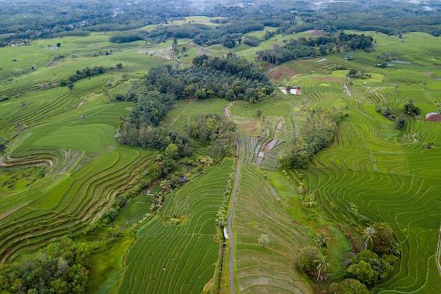 Luchtfoto landschap rijstvelden in indonesië met verbazingwekkende patroon van velden in de lucht