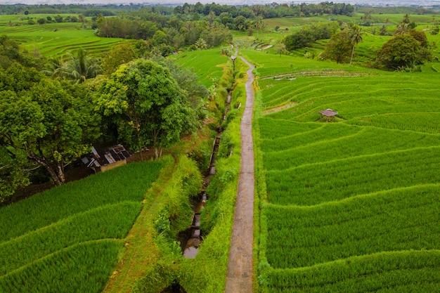 Luchtfoto landschap rijstvelden in indonesië met verbazingwekkende patroon van velden in de weg