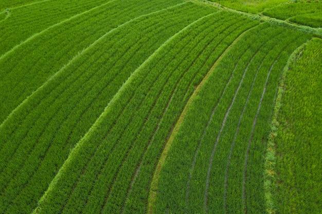 Luchtfoto landschap rijstvelden in indonesië met verbazingwekkende patroon van velden
