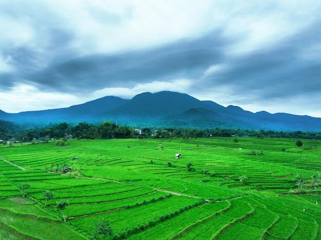 Luchtfoto rijstvelden met berg
