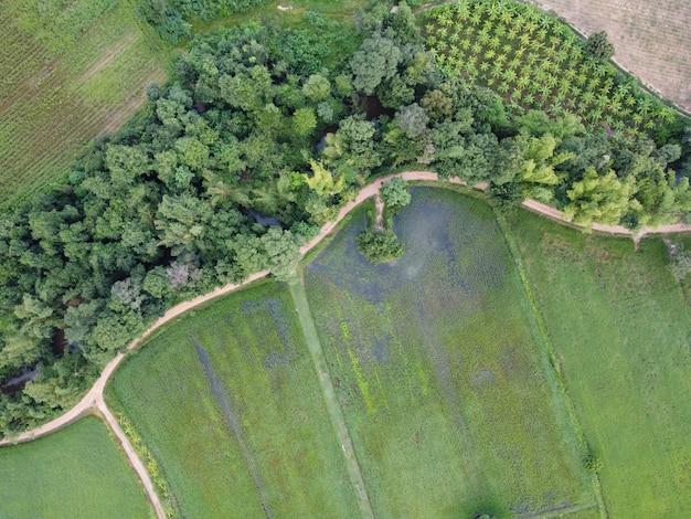 Luchtfoto's van groene velden, wegen en kanalen bedekt met grote bomen.