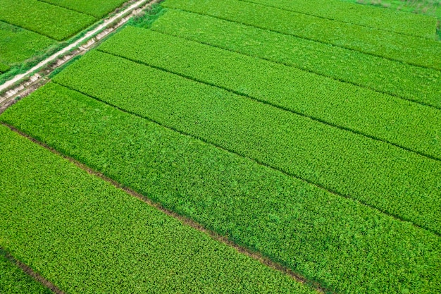 Luchtfoto's van rijstvelden
