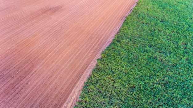 Luchtfoto suikerriet veld