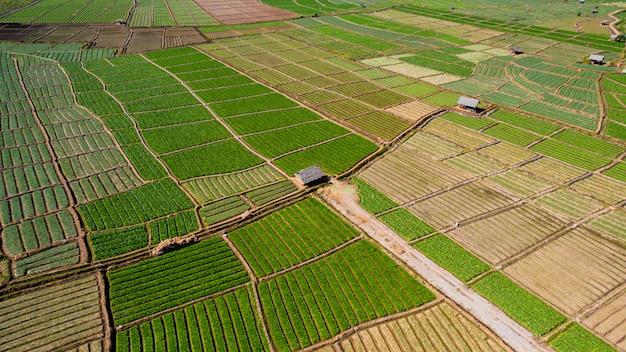 Luchtfoto van agrarische groene en gele rijst veld
