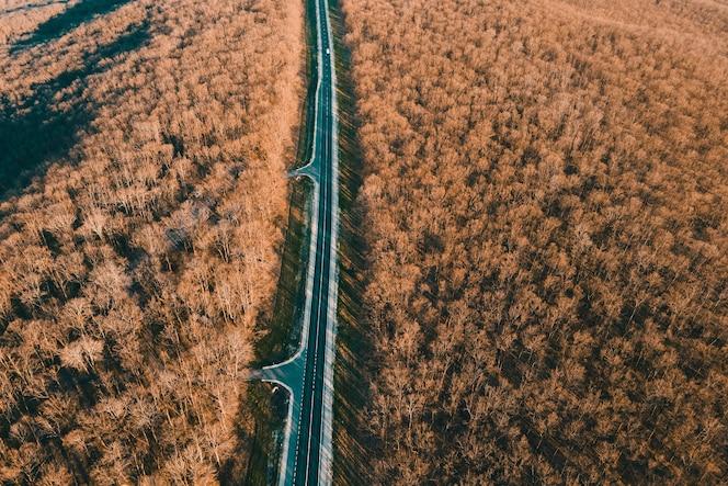 Luchtfoto van auto's die op een asfaltweg rijden in een bladloos bos, filmische drone-opname die over een rechte snelweg in de bergen vliegt