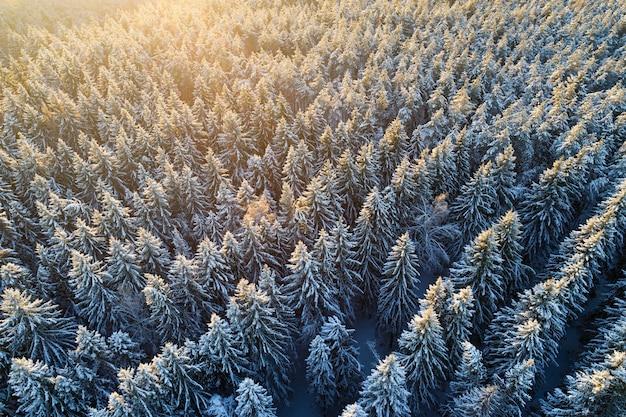 Luchtfoto van besneeuwde sparrenbos