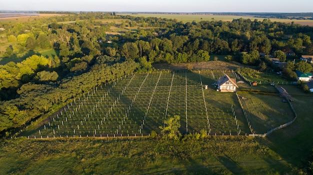 Luchtfoto van bloeiende koolzaad veld en boomgaard met fruitbomen. boomgaard met appels
