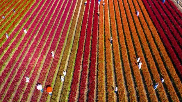 Luchtfoto van bloem veld
