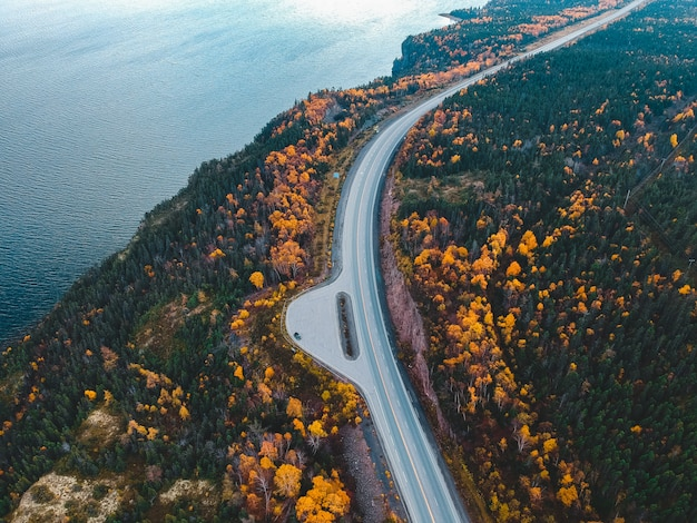 Luchtfoto van bomen naast de weg