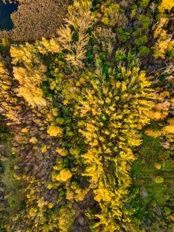 Luchtfoto van bos in de herfst met kleurrijke bomen. drone fotografie.
