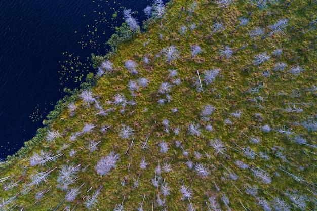 Luchtfoto van bosmeer en moerassige kust met deadwood