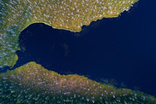 Luchtfoto van bosmeer en moerassige oevers met deadwood