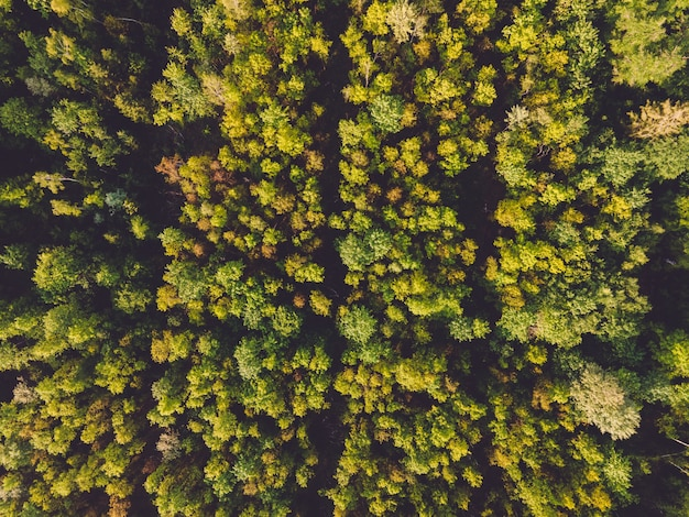 Luchtfoto van bossen in het zonlicht overdag in duitsland - perfect voor natuurlijke concepten