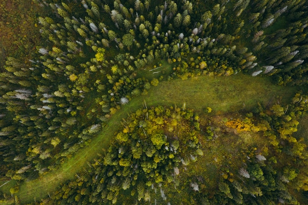 Luchtfoto van bosvernietiging en ontbossing.