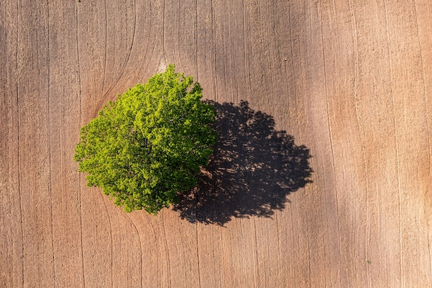 Luchtfoto van boven naar beneden op een eenzame boom in het midden van een gecultiveerd veld, veld met tractorsporen, kopieer ruimte