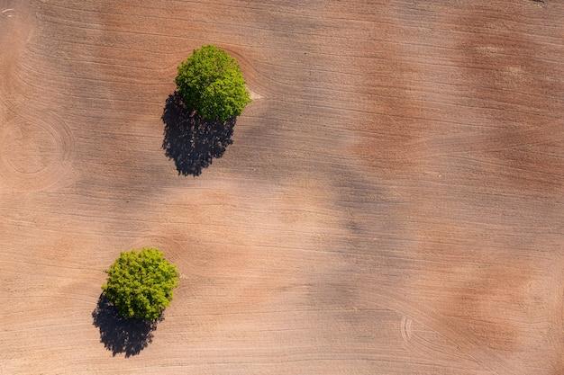 Luchtfoto van boven naar beneden op twee bomen in het midden van een gecultiveerd veld, veld met tractorsporen, kopieerruimte