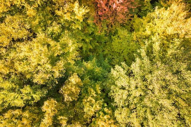 Luchtfoto van boven naar beneden van groene en gele luifels in herfst bos met veel verse bomen.