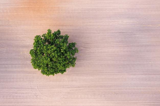 Luchtfoto van bovenaf op een eenzame boom in het midden van een gecultiveerd veld, veld met trekkersporen, kopieerruimte