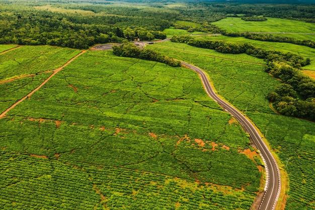 Luchtfoto van bovenaf van een weg die door theeplantages op het eiland mauritius gaat