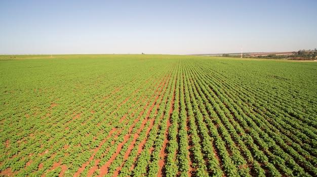 Luchtfoto van de aardappelplantage