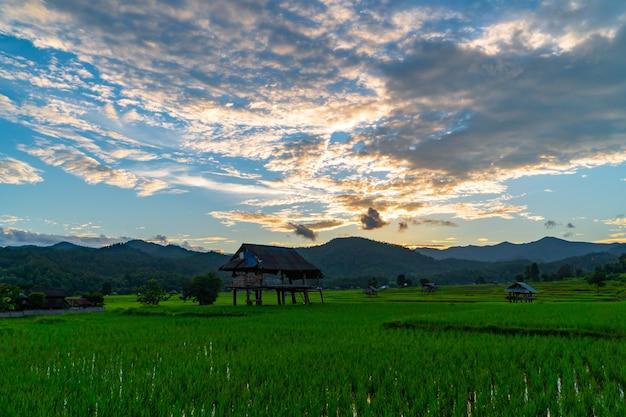 Luchtfoto van de avondlucht over groene rijstvelden met een hut in de velden in noord-thailand