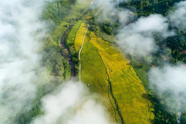 Luchtfoto van de drone top down van groene en gouden rijstvelden met prachtig licht van de natuur in de ochtend