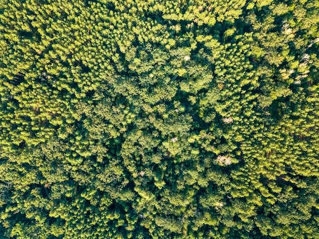 Luchtfoto van de drone van bladverliezende groene wouden in de zomer, tijd. natuurlijke achtergrond als lay-out voor uw ideeën.