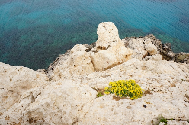 Luchtfoto van de kustlijn met gele bloemen in de rotsen en de kalme oceaan