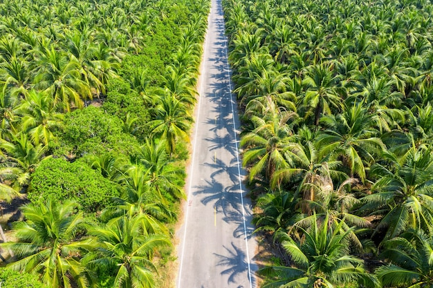 Luchtfoto van de plantage van kokospalmen en de weg.