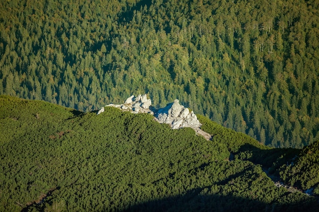 Luchtfoto van de rotsachtige berg sneznik bedekt met bossen in slovenië