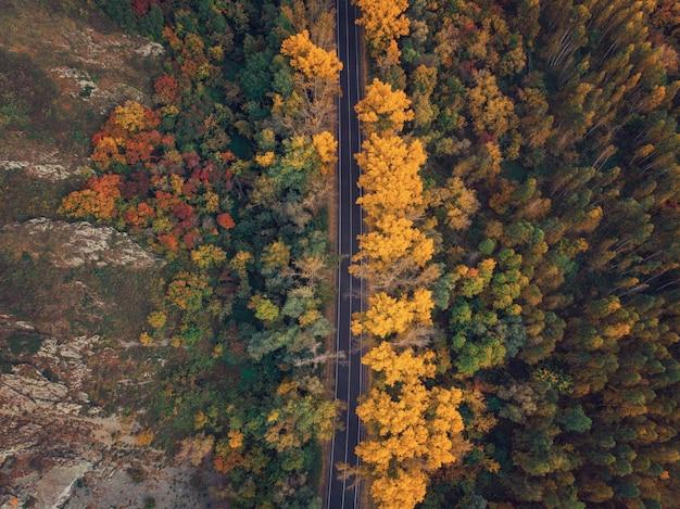 Luchtfoto van de weg in de prachtige herfst altai bos
