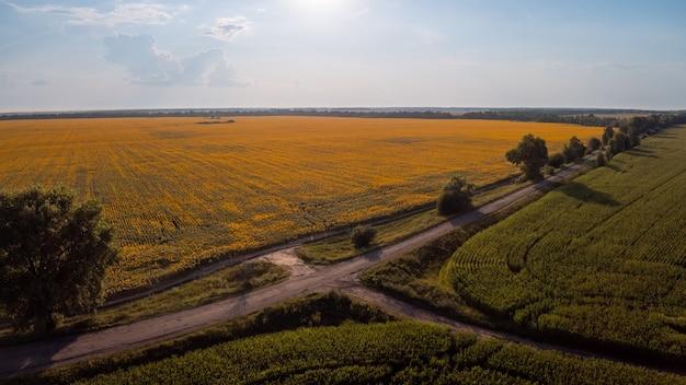 Luchtfoto van de weg tussen maïs- en zonnebloemvelden op het platteland