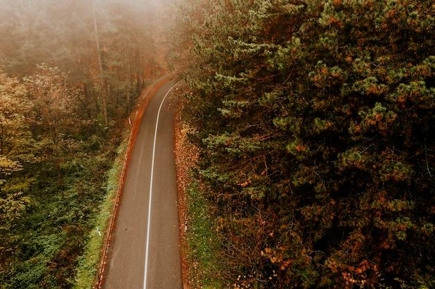 Luchtfoto van dik bos in de herfst met weg doorsnijden