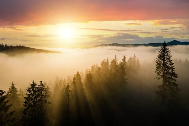 Luchtfoto van donkergroene pijnbomen in vuren bos met zonsopgangstralen schijnt door takken in mistige herfstbergen.