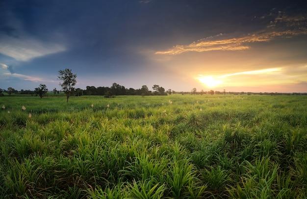 Luchtfoto van drone suikerriet veld met zonsondergang hemel natuur landschap achtergrond.