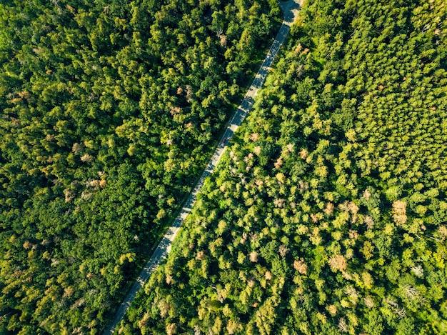 Luchtfoto van een drone op een groen bos met asfaltweg op een zonnige dag. milieubehoud concept. natuurlijke lay-out voor uw ideeën.