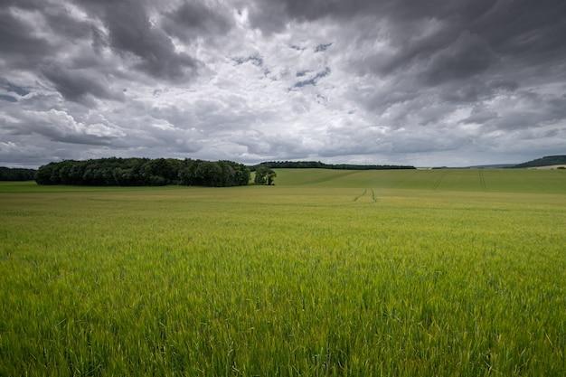 Luchtfoto van een grasland onder tijdens een bewolkt weer