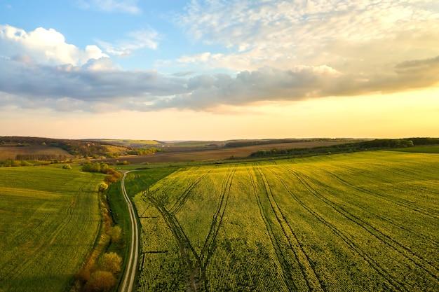 Luchtfoto van een heldergroen landbouwbedrijf met groeiende koolzaadplanten en een onverharde landweg bij zonsondergang