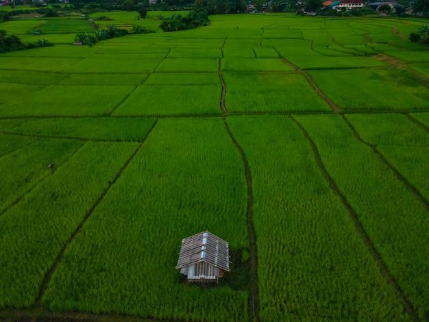 Luchtfoto van een hut in het midden van prachtige groene rijstvelden tijdens de schemering