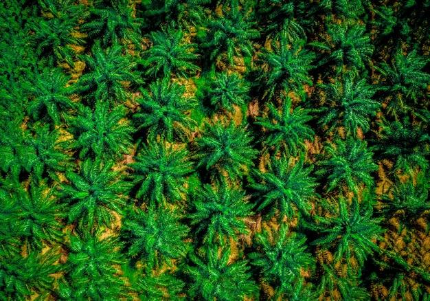 Luchtfoto van een palmolie industrieel boomplantagepatroon